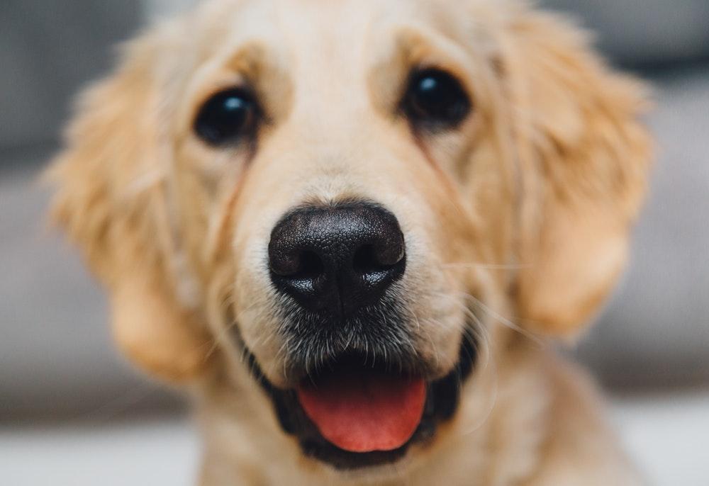 5 cosas que no sabias de los perros.